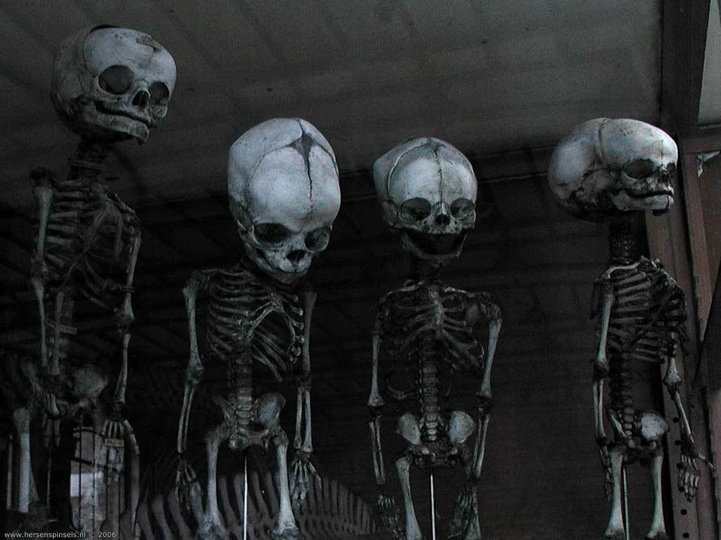 happy-skeletons