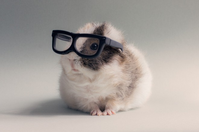 2815973-glasses-hamster-pet-animals___animal-wallpapers