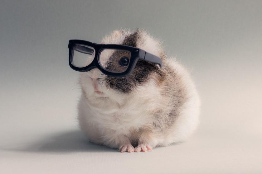 2815973-glasses-hamster-pet-animals___animal-wallpapers